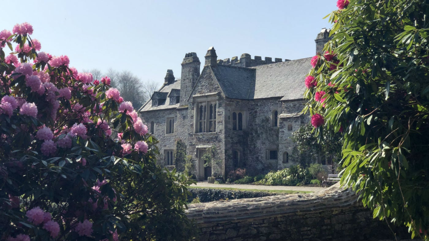 View of the rhododendrons and house from the East Terrace garden at Cotehele