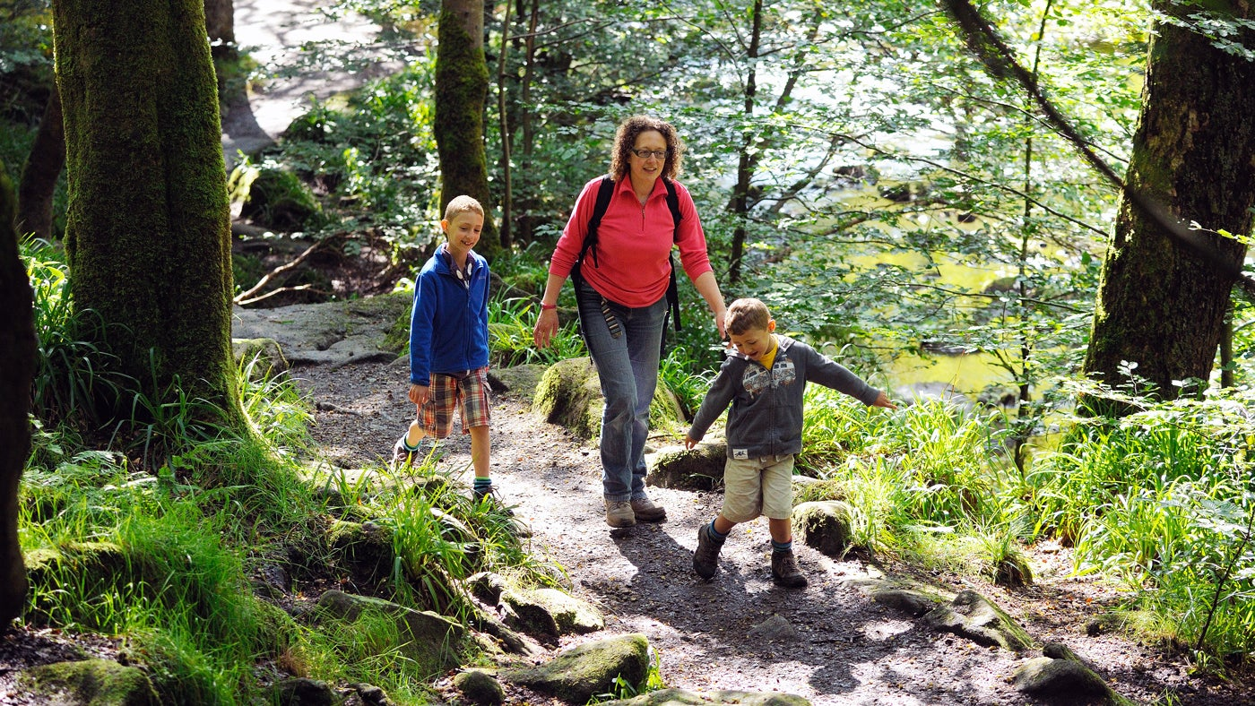 Family on a woodland walk