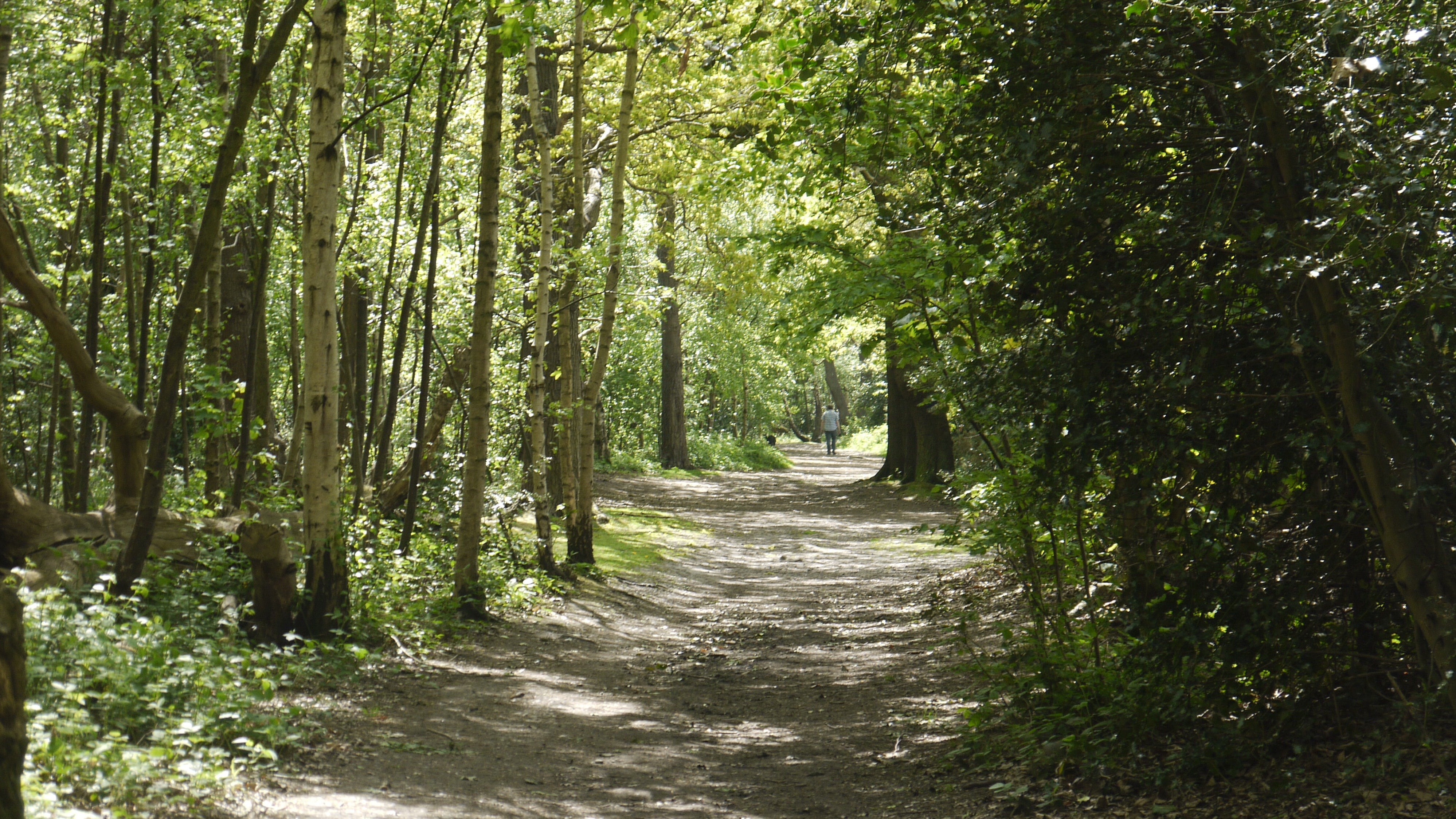 A tree lined path in the woodland