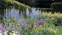 Herbaceous borders with delphiniums, foxgloves and meadow clary