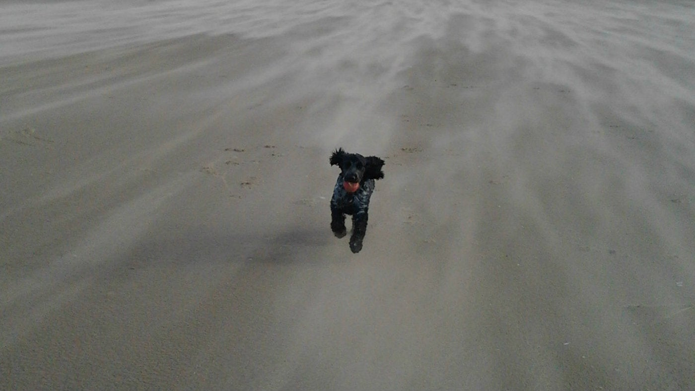 Dog runs along the beach