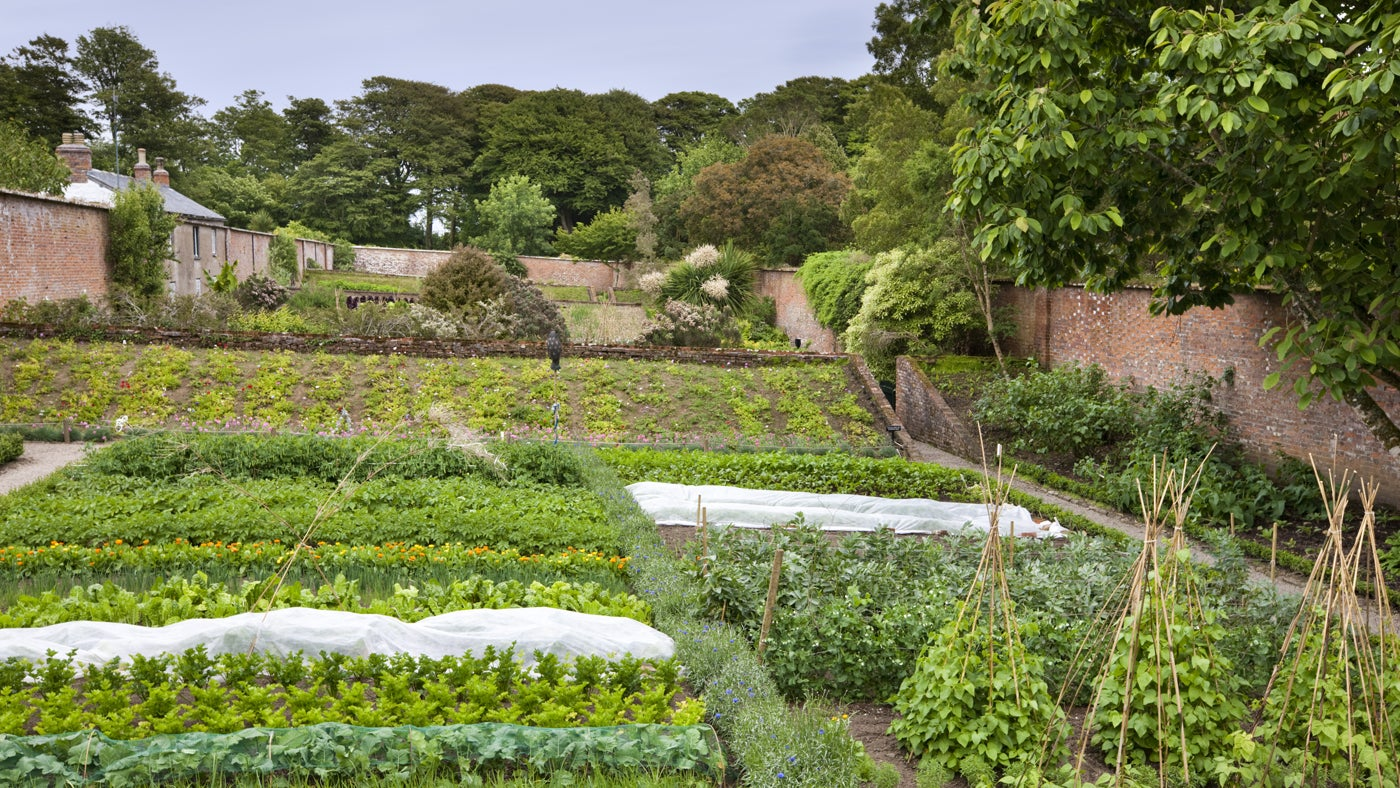 Top 9 kitchen gardens for sustainable food   National Trust