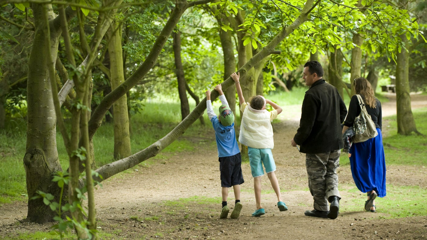 Visitors walking through woodland on the estate at Sutton Hoo, Suffolk