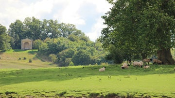 Sheep grazing in the fields with Park Seat in the distance