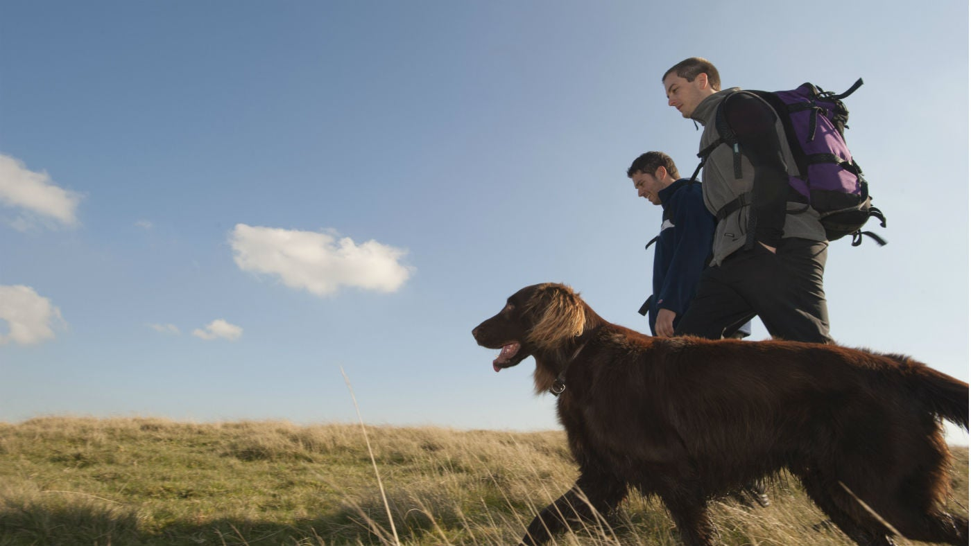 Visitors walking their dog through the countryside