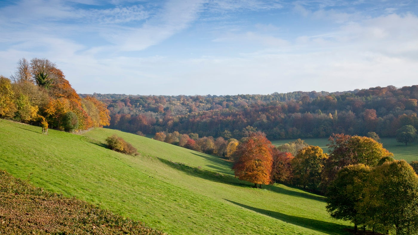 A beautiful view down a hillslope. Autumnal trees can be seen.