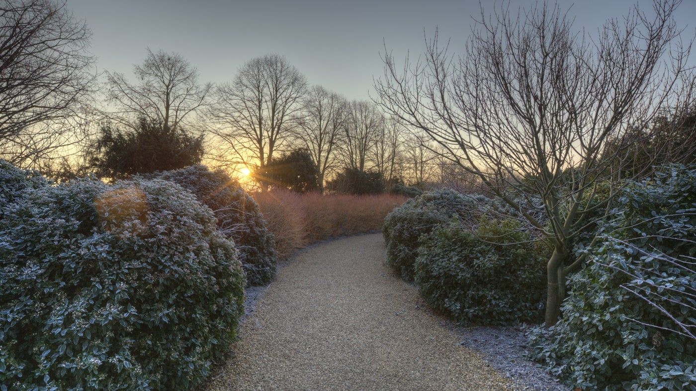 The Winter Walk in February at Anglesey Abbey, Cambridgeshire