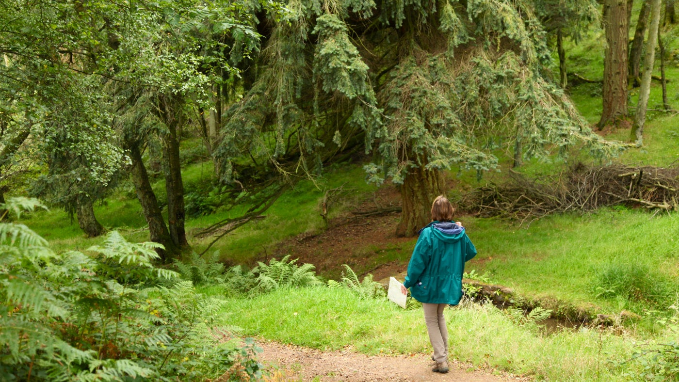 Explore ancient woodland in Horner Wood, Holnicote Estate, Somerset