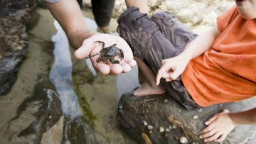 Children holding a crab in a rockpool
