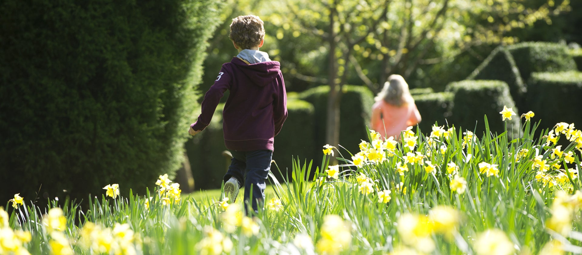 Places to see daffodil gardens & fields   National Trust