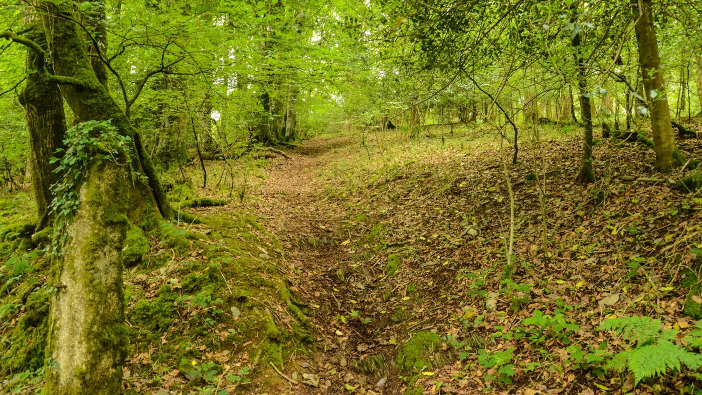 Plymbridge Woods, Devon