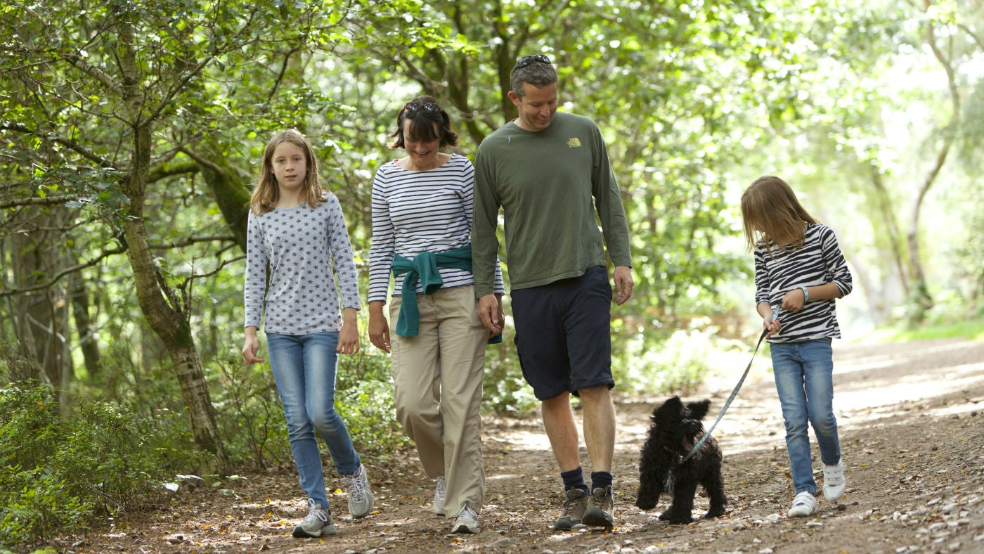 Family walking their dog in the woods, Devon