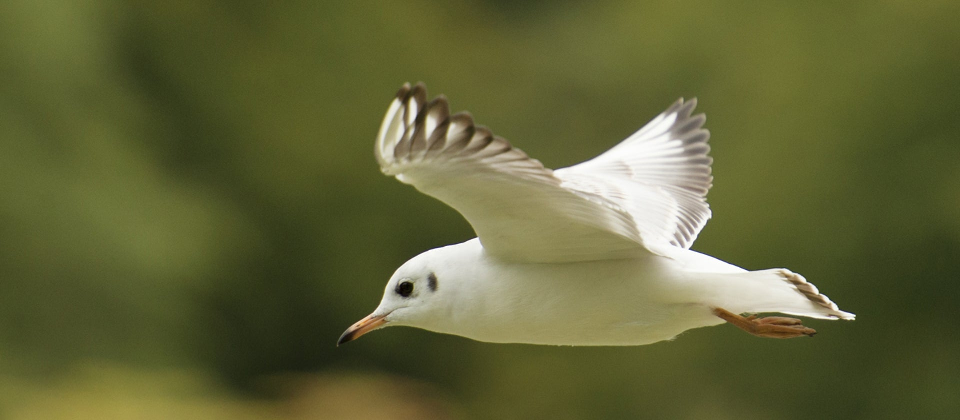 How to improve your bird spotting skills | National Trust