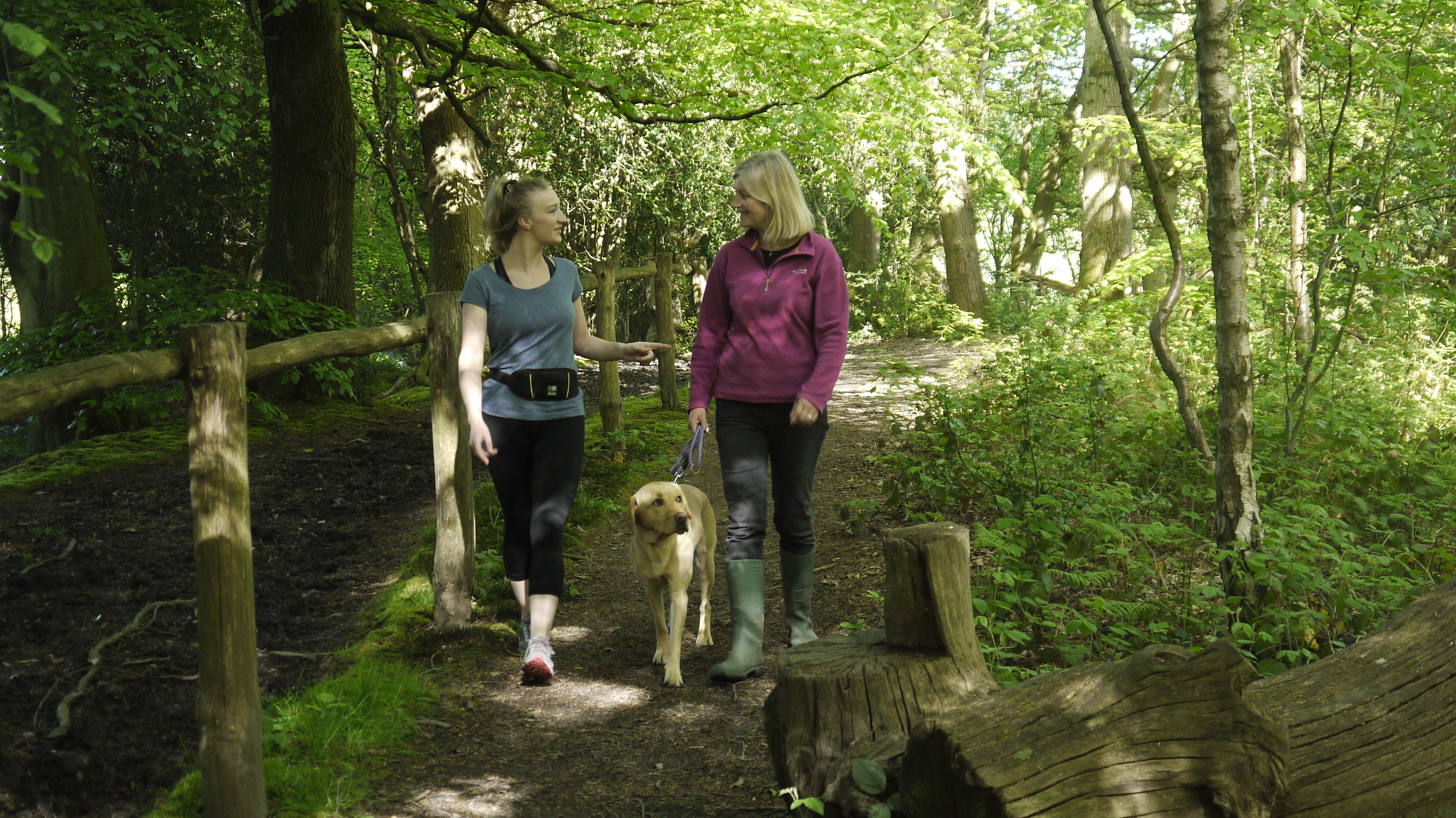 Best places for dog walking