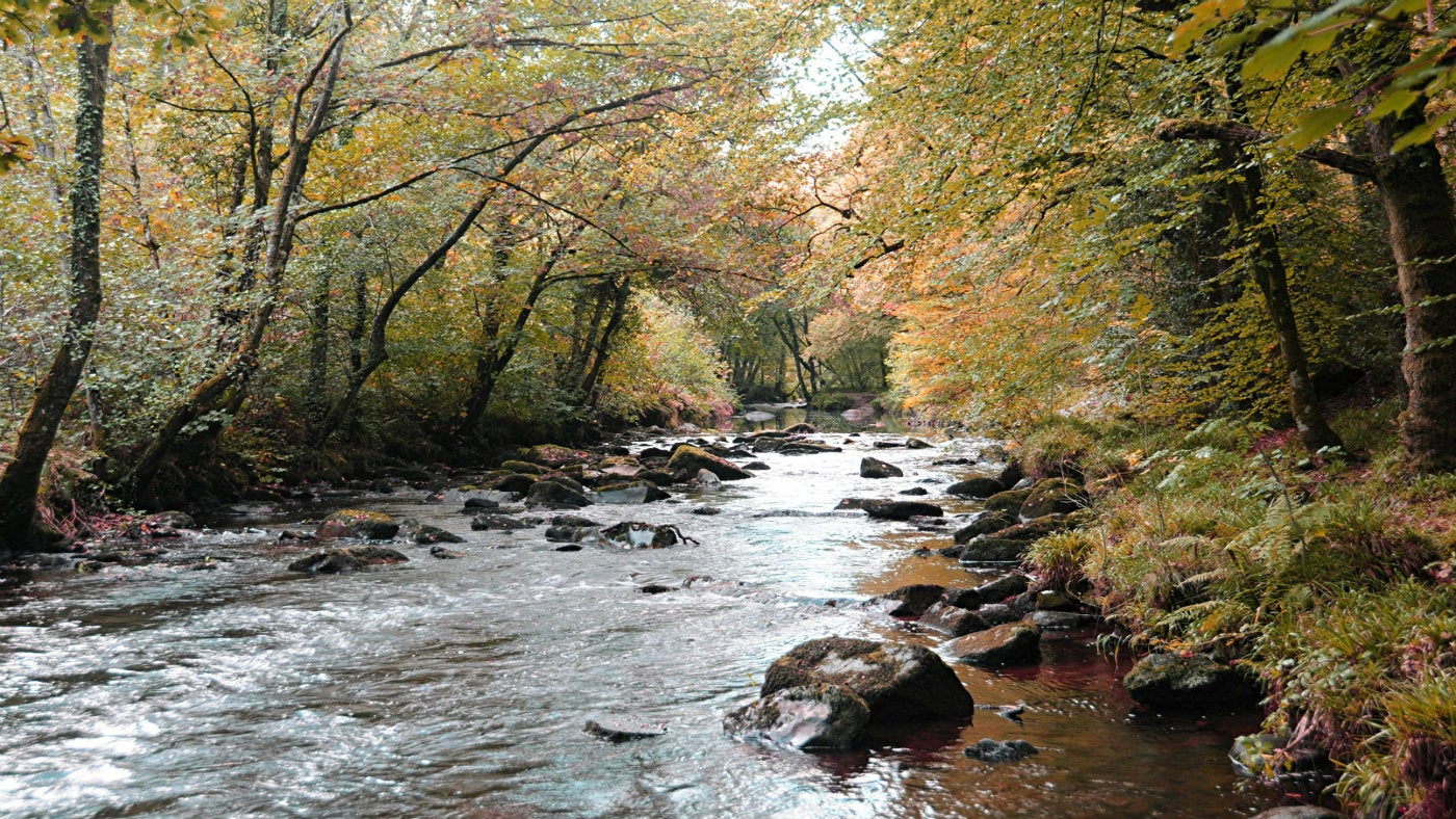 River Teign in autumn