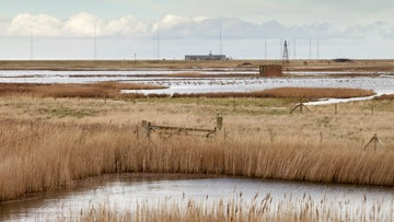 Grazing marshes on airfield Orford Ness
