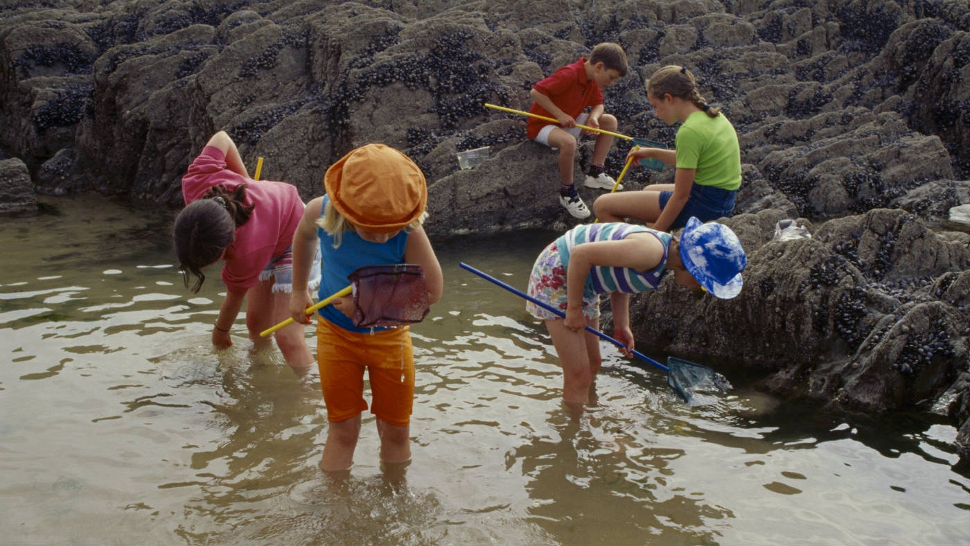 Group of children exploring rock pool with nets