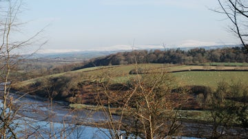Little Milford woods overlooking the River Cleddau
