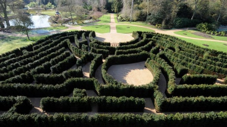 The maze at Cliveden, Buckinghamshire