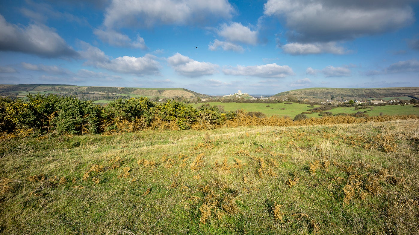 A view of Corfe Common