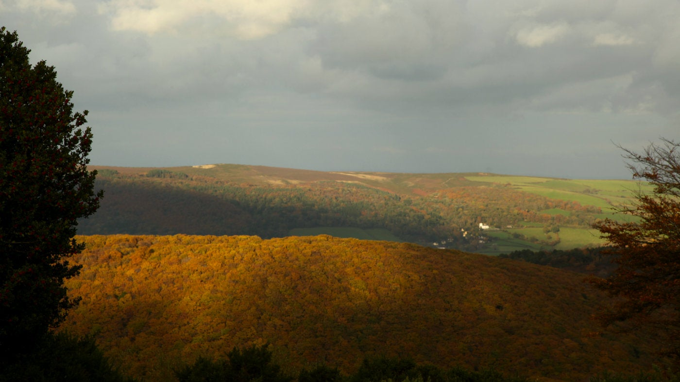 View towards Selworthy in autumn colour on the Holnicote Estate, Exmoor National Park, Somerset.