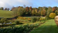 View over Upton's garden to the autumn colour in the trees behind the garden