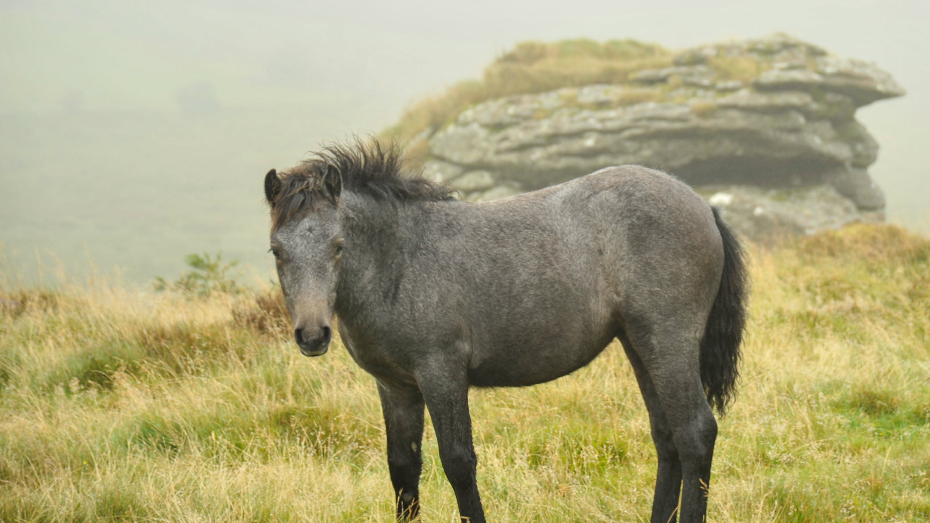 Pony on Bel Tor, near The Church House, Devon