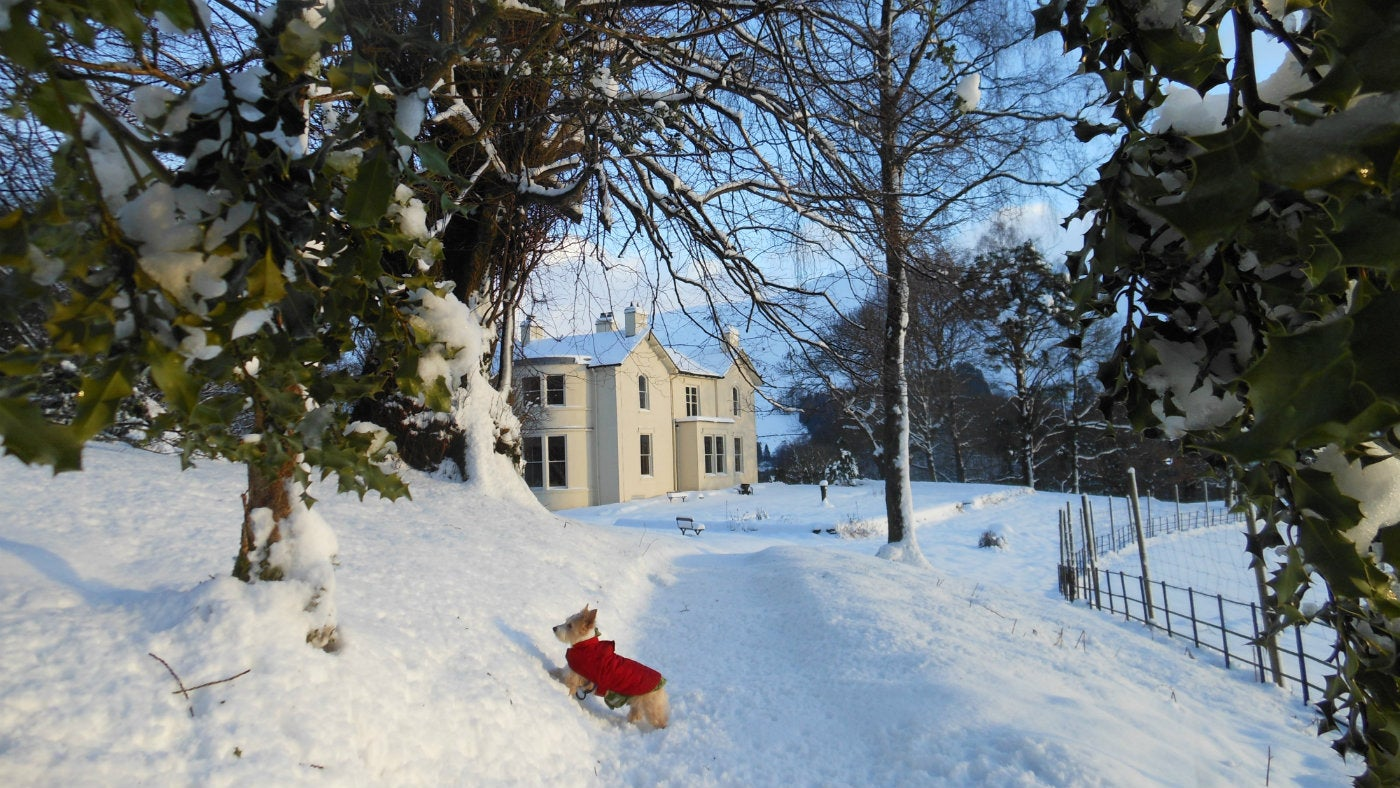 A small dog in the snow outside Allan Bank
