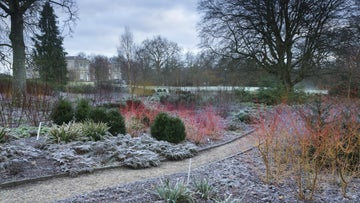 A frosty path winds through colourful shrubs in the winter garden at Mottisfont, Hampshire