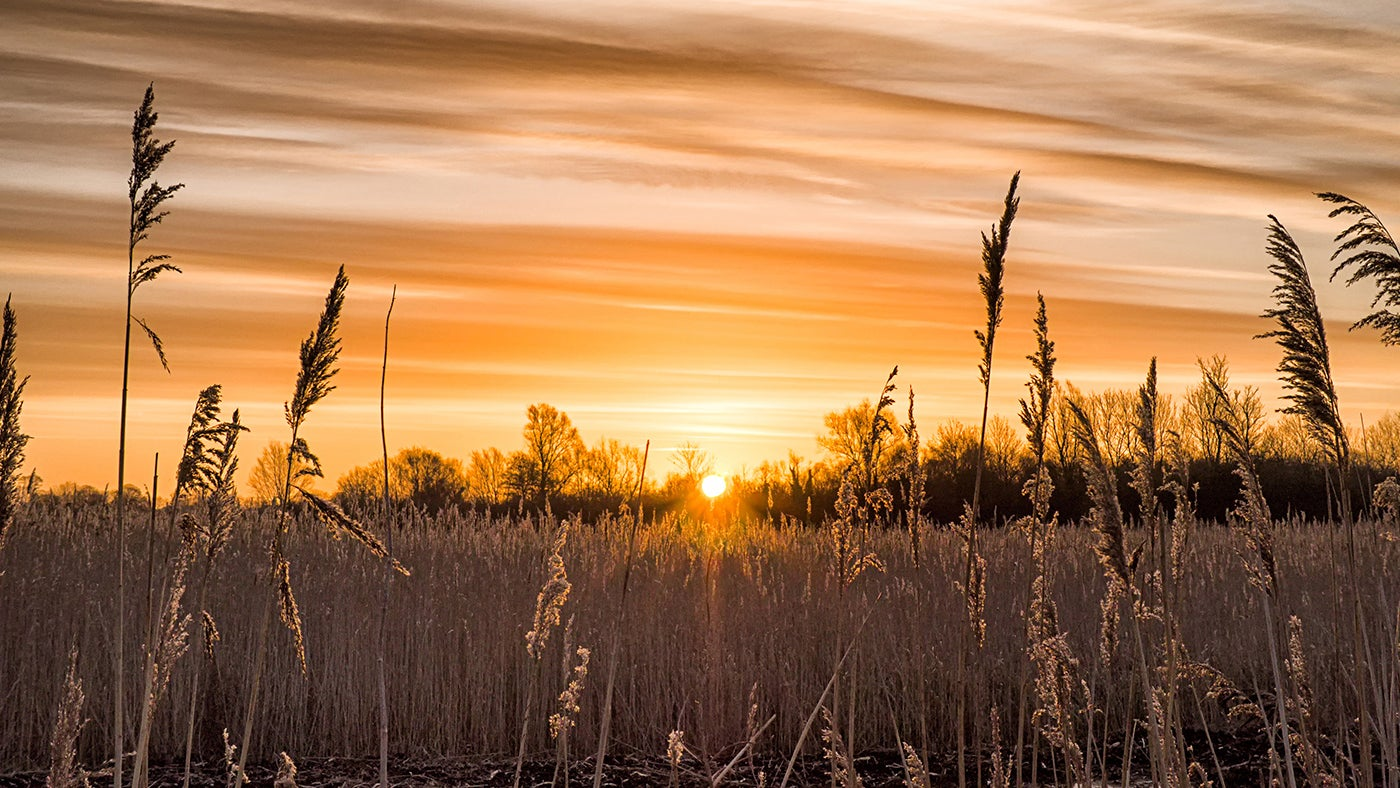 Wicken Fen - sunset over Sedge Fen