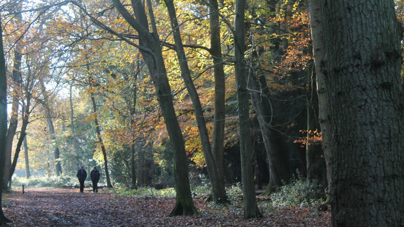 People walking in Leigh Woods.