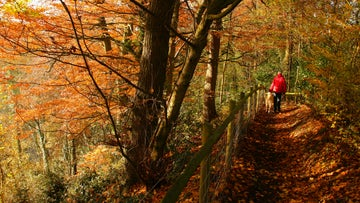 Walking in the Northern Woods at Quarry Bank Cheshire