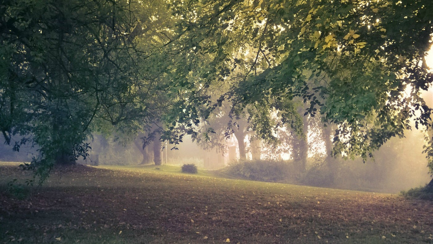 Tyntesfield autumn mist