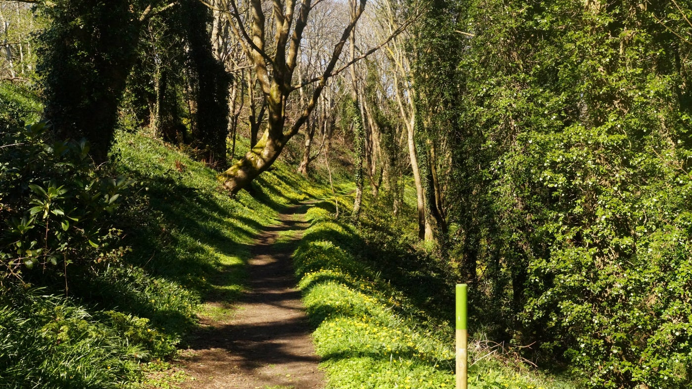 Woodland at Murlough National Nature Reserve