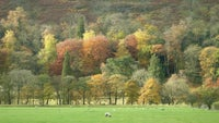 Upper Wharfedale woodland in autumn