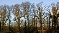 Trees in winter, Parke, Devon