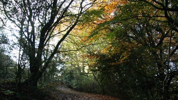 Autumn colours at Hudswell Woods in the Yorkshire Dales