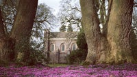 Killerton's grade I listed chapel with a blanket of cyclamen, Devon