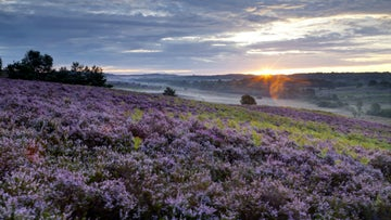 Sunrise at Ibsley Common, New Forest, Hampshire