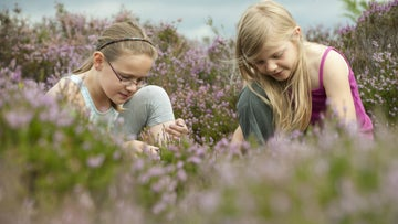 Children hunting for bugs in heather at the National Trust