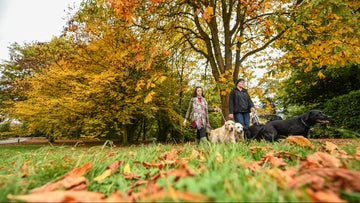 Visitors and their dogs enjoying Erddig's 1,200-acre estate in autumn