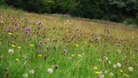 The meadow at Lanlay, Vale of Glamorgan, Wales
