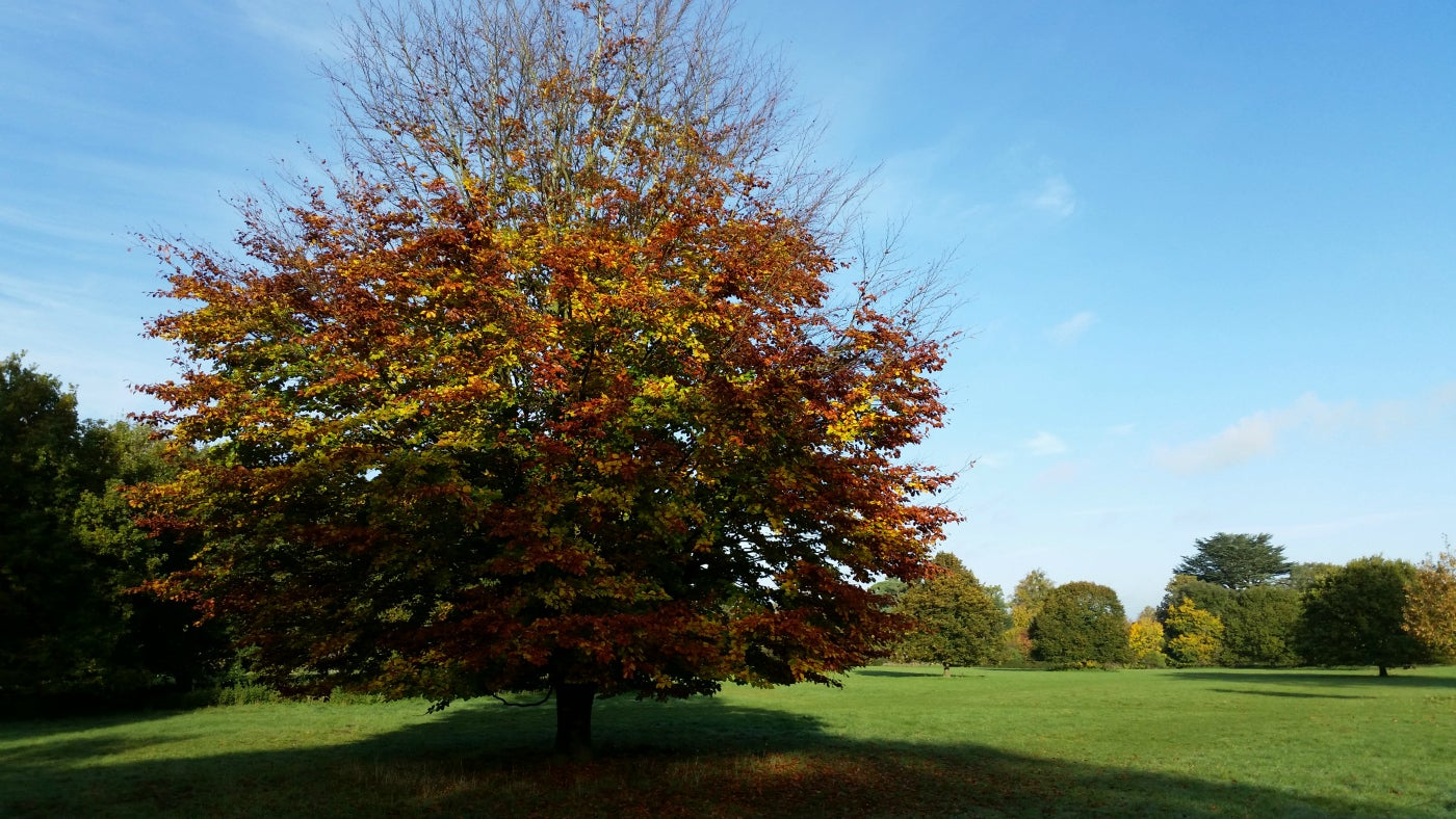 Trees in the parkland in autumn colours