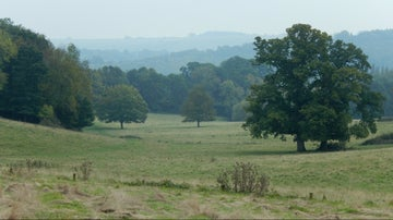 Grassland and trees Dinton Park