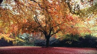 The grounds covered in a carpet of autumnal red leaves