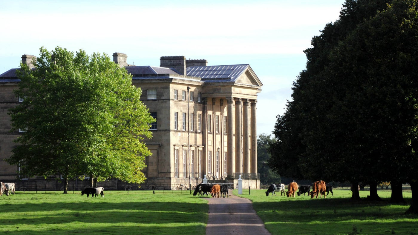 A side view of the Mansion with spring trees and cows in the foreground