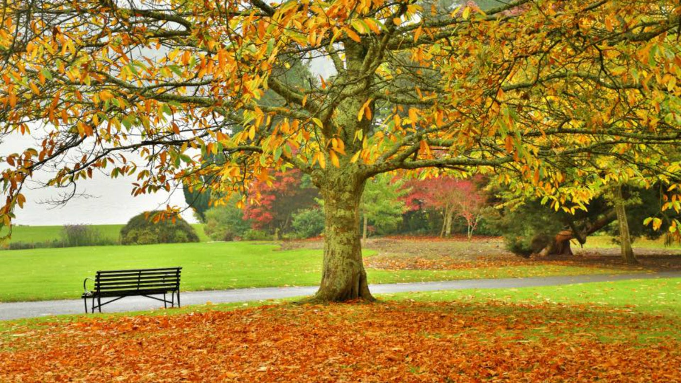 Autumnal colour at Plas Newydd, Anglesey