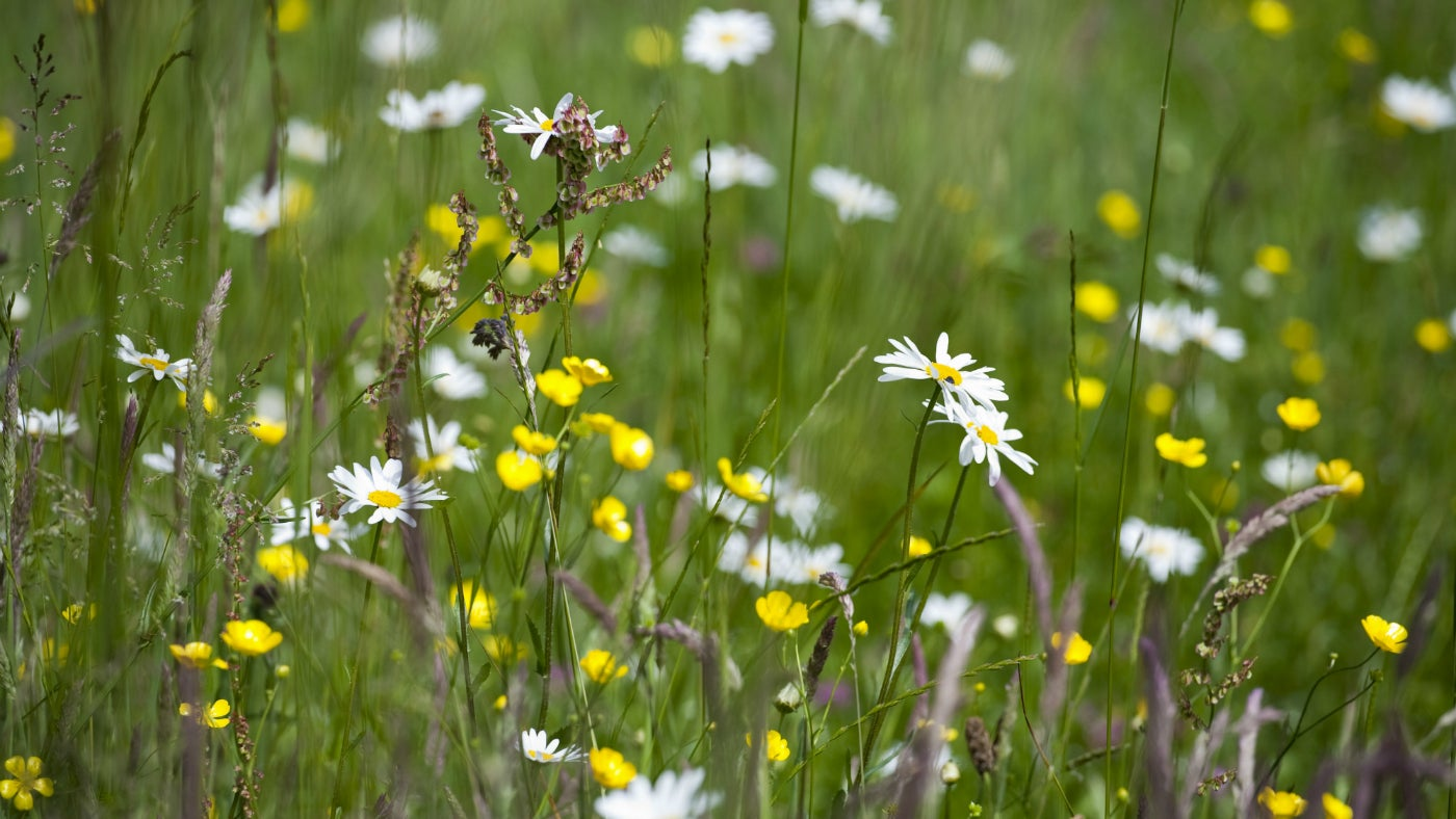 Flowers in meadow