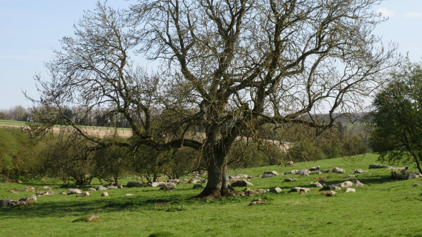 Tree sheep and stones