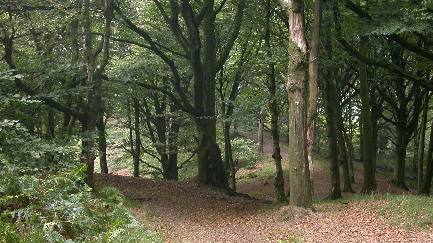 A clearing in the woodland at Lewesdon Hill